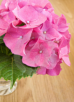 Pink Hydrangea Royalty Free Stock Images - Image: 20461379
