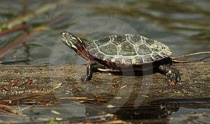 Turtle Stock Photography - Image: 20464002