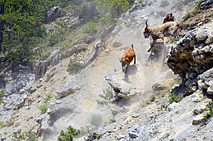 Goats On Rocks Stock Image - Image: 20466841