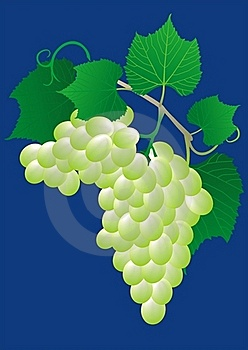 Green Grape Royalty Free Stock Photography - Image: 20480627