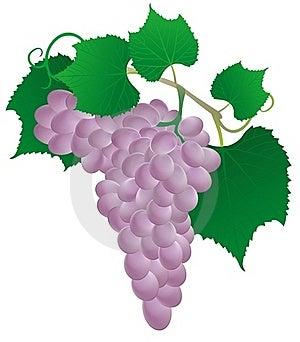 Pink Grape Stock Photo - Image: 20480640