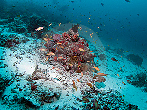 Coral Reef Stock Images - Image: 20484774