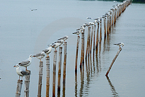 Seagull Sit On Bamboo Royalty Free Stock Image - Image: 20497786