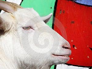 Goat Stock Photo - Image: 2052690