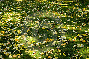 Sun Shade And Leaves 02 Royalty Free Stock Image - Image: 2057296