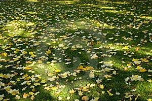 Sombra Y Hojas 02 De Sun Imagen de archivo libre de regalías - Imagen: 2057296