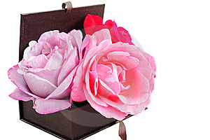 Roses In A Box Stock Photos - Image: 20510323
