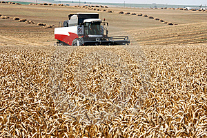 Harvest Stock Photography - Image: 20515132