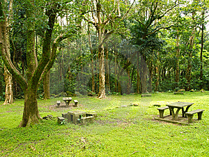 Green Park And Rest Place Stock Photography - Image: 20517232