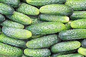 Some Cucumbers Stock Photo - Image: 20540650