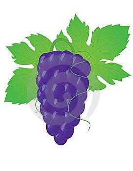Big Grape Stock Photos - Image: 20552743