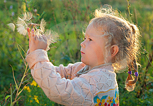 Girl With A Large Dandelion Royalty Free Stock Image - Image: 20554446