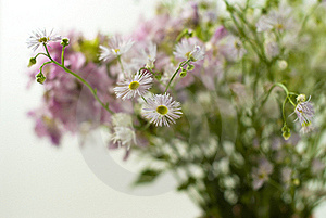 Bouquet Of Wild Flowers On A White Background Royalty Free Stock Image - Image: 20555806