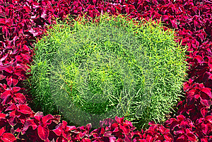 Flower Bed Stock Photo - Image: 20562690
