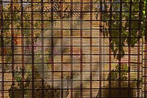 Venetian Blind Stock Photo - Image: 20569100