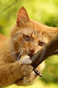 Cat In Nature Royalty Free Stock Photos - Image: 20571808