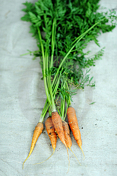Carrots Royalty Free Stock Image - Image: 20572176