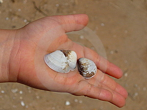 Shells In Child's Hand Royalty Free Stock Photography - Image: 20572337