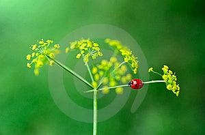 Ladybird Royalty Free Stock Images - Image: 20572389