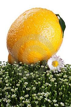 Fresh Lemon On A Green Grass Royalty Free Stock Image - Image: 20587646
