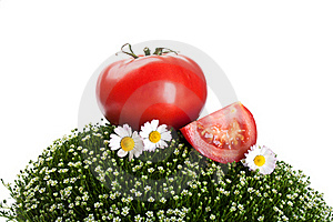 Fresh Tomato On A Green Grass Royalty Free Stock Photography - Image: 20587657