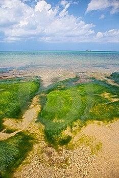 Green Seaweed Stock Photos - Image: 20594083