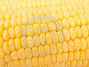 Maize Royalty Free Stock Photo - Image: 20595185
