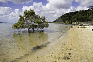 Mangrove In The Sea Royalty Free Stock Photography - Image: 2063597