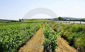 Vineyards Stock Image - Image: 20612941