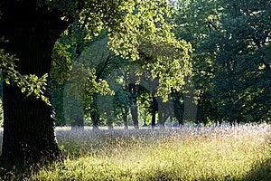 Evening Sun Stock Photography - Image: 20615312