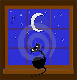 Cat In Window At Night Stock Photography - Image: 20618952