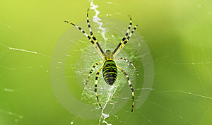 Spider On The Web Stock Photography - Image: 20627882