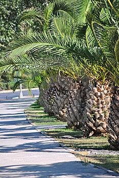 Palm Tree Stock Photography - Image: 20633152
