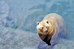 Polar Bear Stock Images - Image: 20642674