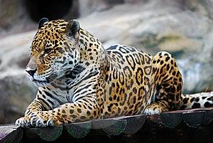 Leopard Portrait Stock Image - Image: 20644441