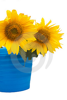 Sunflowers Stock Images - Image: 20653294