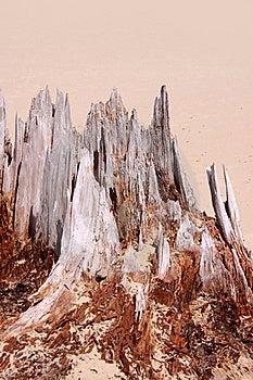 Weathered Tree Stock Images - Image: 20654994