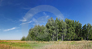 Panorama Of Forest With Vivid Sky Stock Image - Image: 20655291