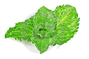 Mint Leaves Stock Photos - Image: 20659073
