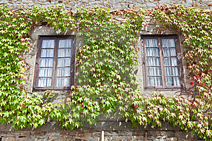 Ivy On The Windows Royalty Free Stock Photo - Image: 20662565