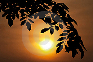 Silhouette Leaf Royalty Free Stock Image - Image: 20682006