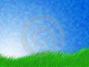 Green Grass Stock Image - Image: 20690351