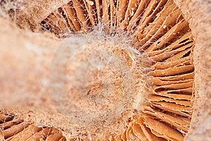 Mushroom Stock Photo - Image: 20698000