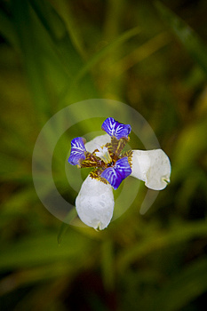 Tropical Flower Stock Images - Image: 2072964
