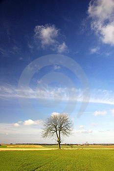 Alone Tree Royalty Free Stock Image - Image: 2073766