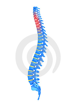 Slipped disc Stock Photography