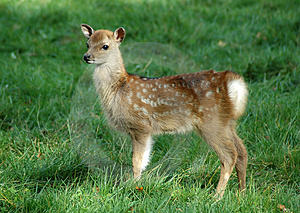 Bambi Stock Photography - Image: 2079412