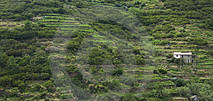 Hillside In Cinque Terre, Italy Royalty Free Stock Photo - Image: 20705705