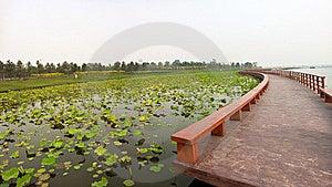 Lotus Pond With Zigzag Wooden Bridge Royalty Free Stock Images - Image: 20706129