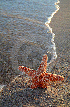 Starfish On A Tropical Beach Stock Images - Image: 20708404